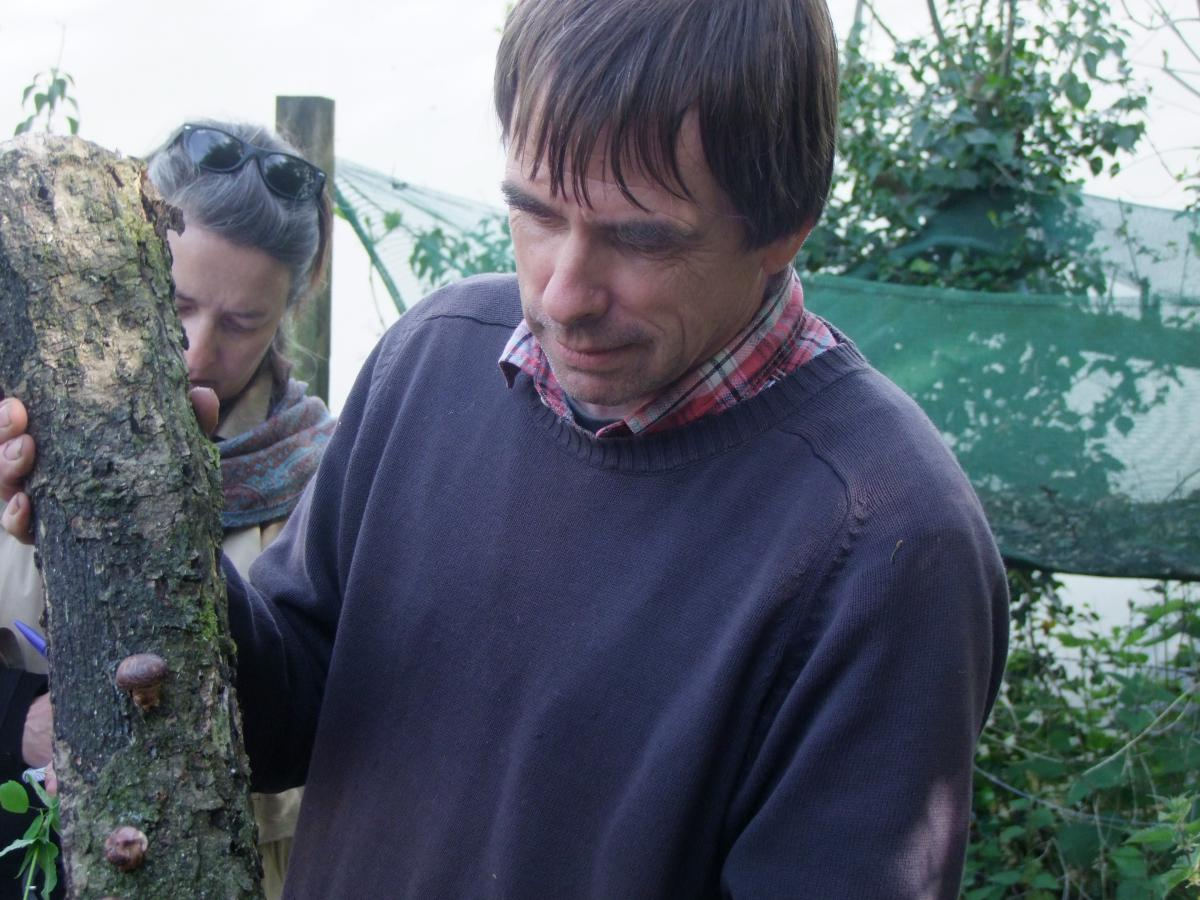 Martin Crawford montre une bûche de pin humide sur laquelle il fait pousser des champignons shiitake - Crédit Diana Semaska