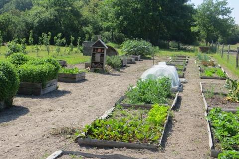A la d couverte du jardin de cocagne angevin bio consom for Les jardins de cocagne