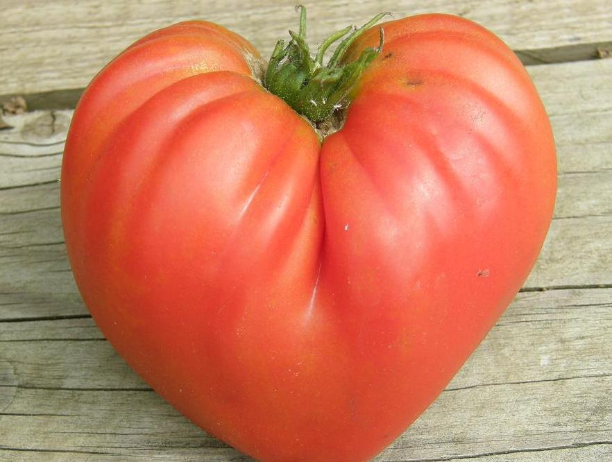 Tomate coeur de boeuf Reif Red - crédit Yama