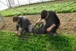 les Jardins du Giessen, jardin bio d'insertion en Alsace