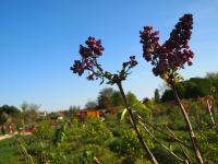 fleur parc lilas vitry sur seine circuits courts proximite bio solidaires fnab