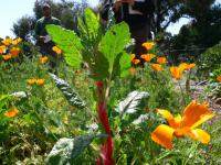 permaculture credit planet a