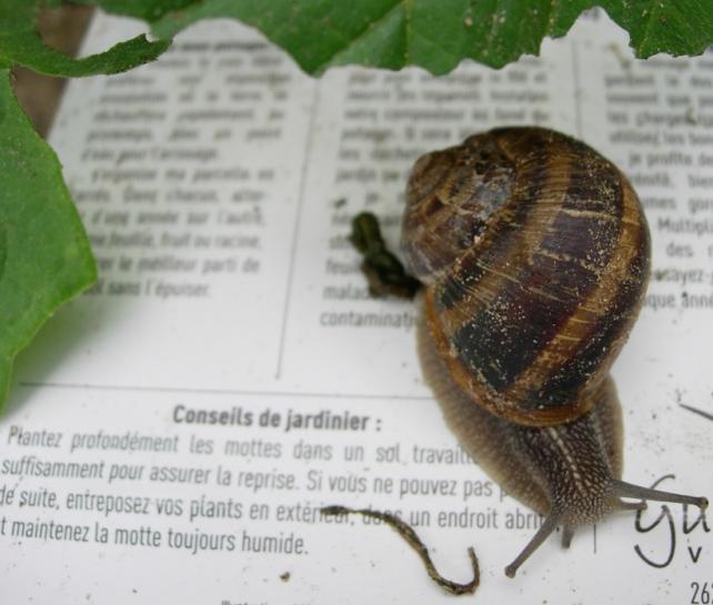 escargot concretement bio angers bio consom'acteurs jardinage