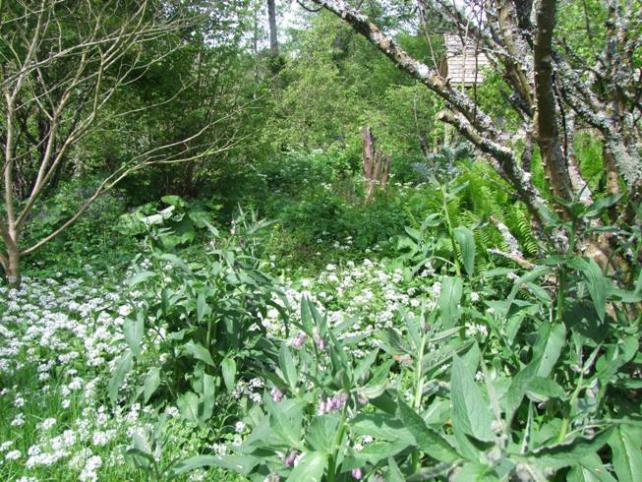 Difficile de nommer toutes les plantes qu'il y a dans la forêt jardin de Martin Crawford - crédit Diana Semaska