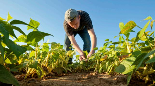 Site de rencontre agriculteur bio