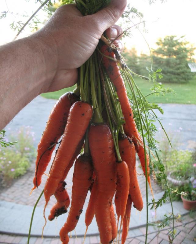 arrachage carottes amap denise et daniel vuillon expropriation