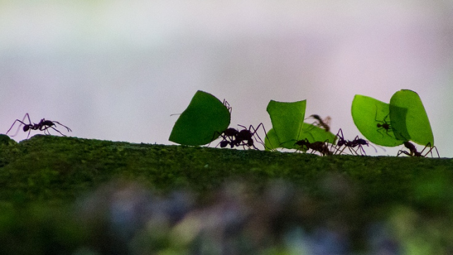 fourmis senat alimentation soutenable