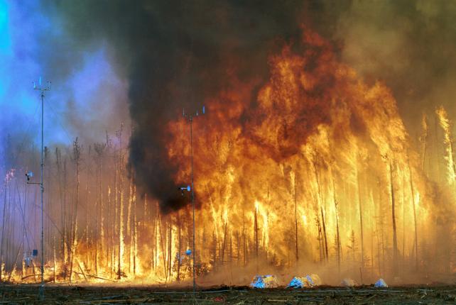 Huile de palme : des feux de forêt là-bas, notre choix de ...
