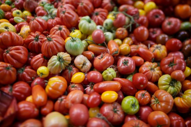 tomates variétés anciennes jacques caplat expressions intérêt collectif