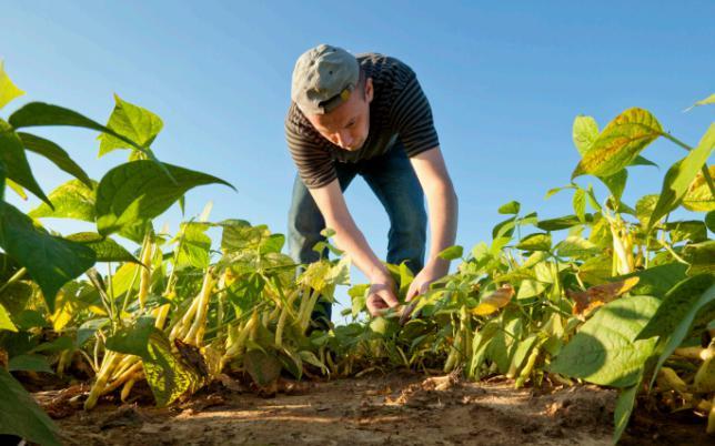 agriculteur bio - crédit photo USDA