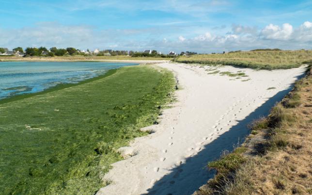 algues vertes - credit ludovic
